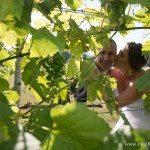 leelanau peninsula wedding photo at 45 north winery